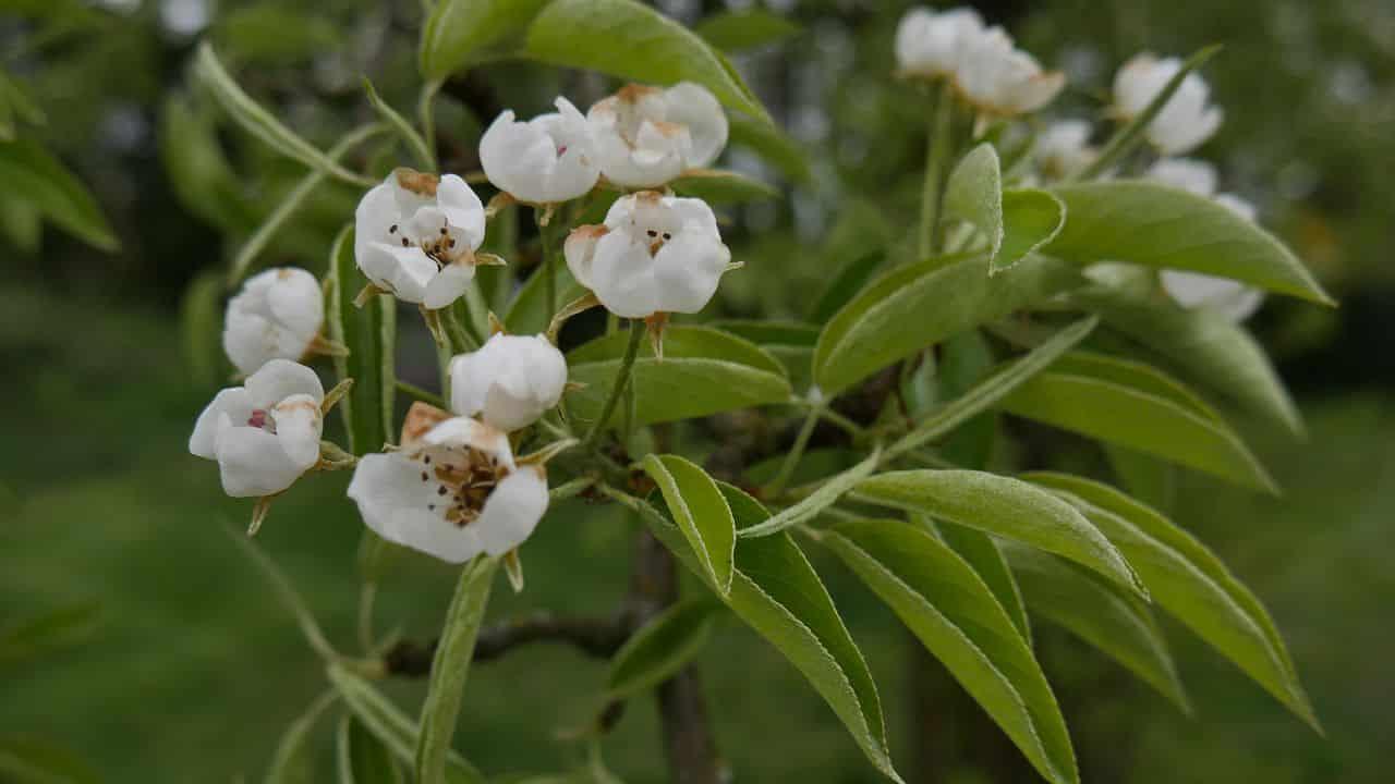 Baumblüte im Naturgarten