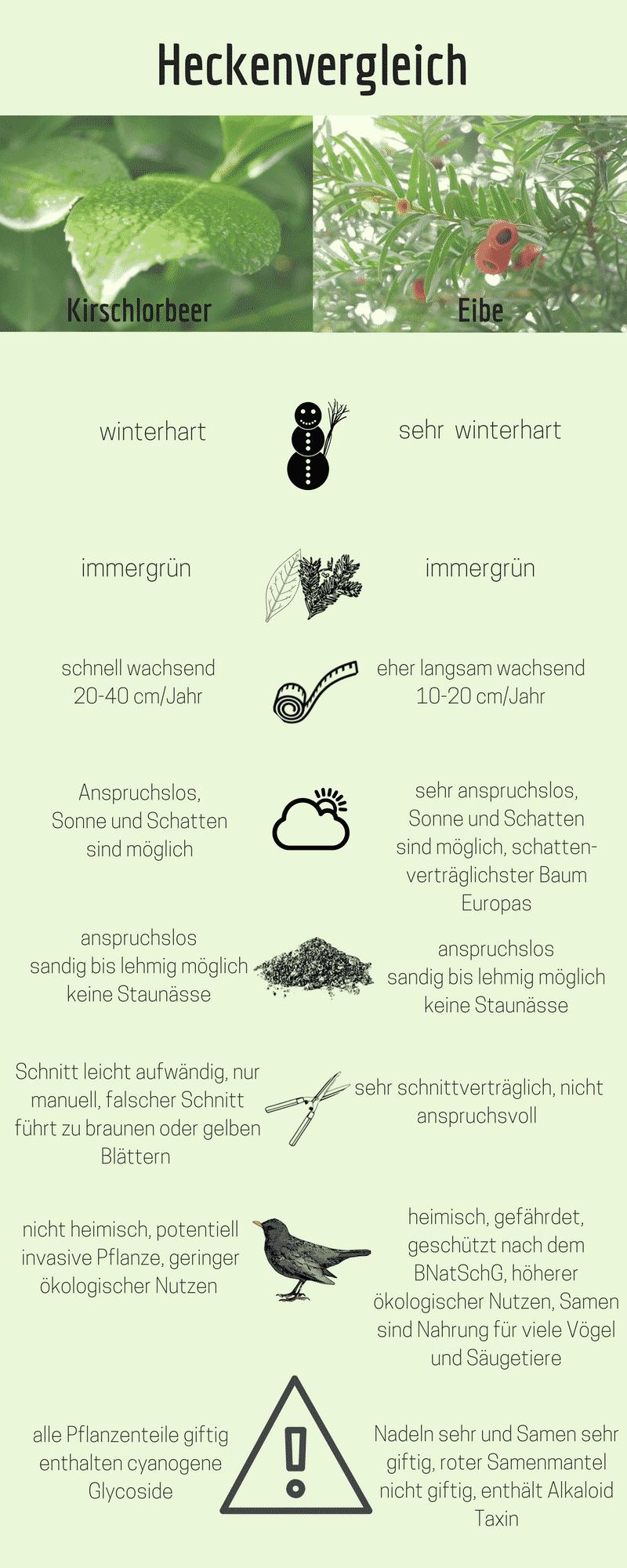 Vergleich Kirschlorbeer und Eibenhecke