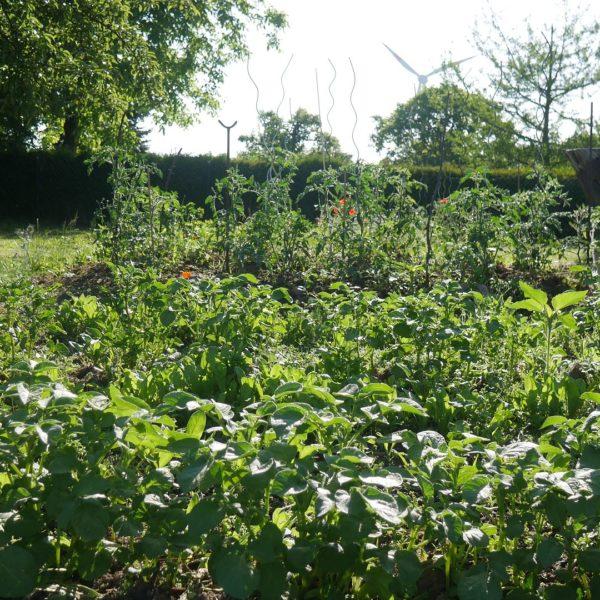 Mischkultur im Naturgarten