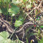 Blogparade Naturgarten Ideen Gärtnern ohne Gift pestizidfreier Garten Aufklärung Blog