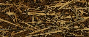 Mulchmaterilien als Beetabdeckung