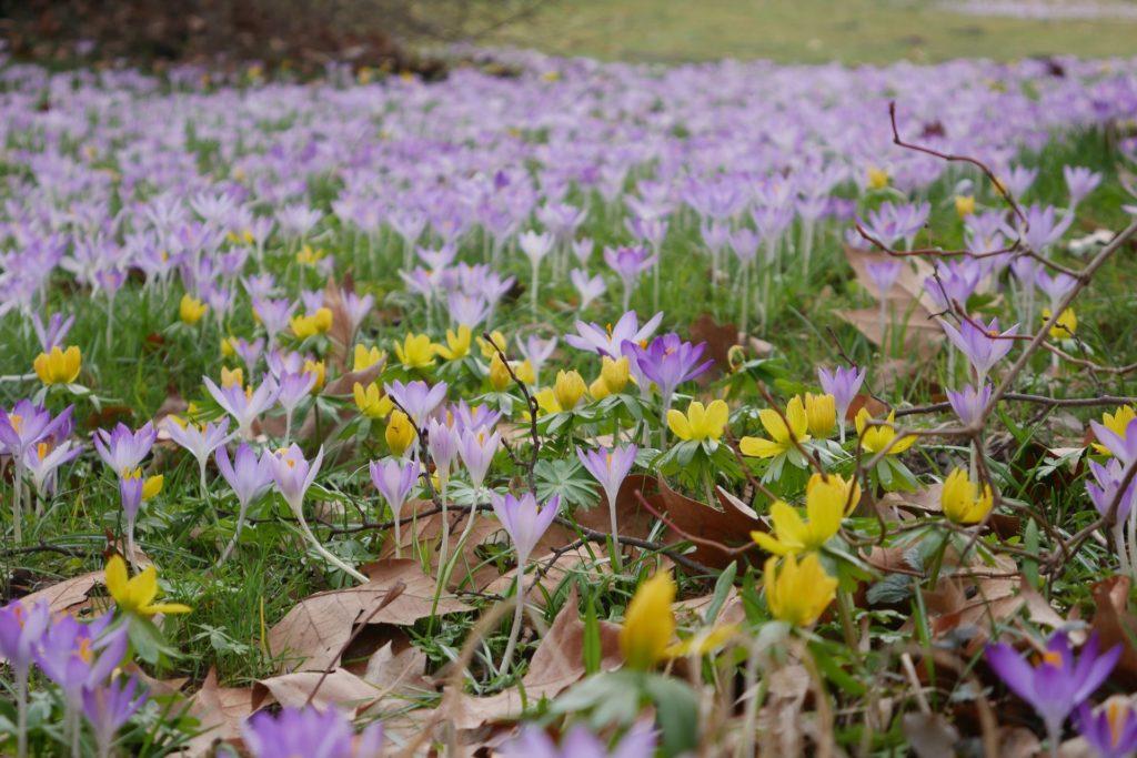 Frühlingsblumen Bienenweide