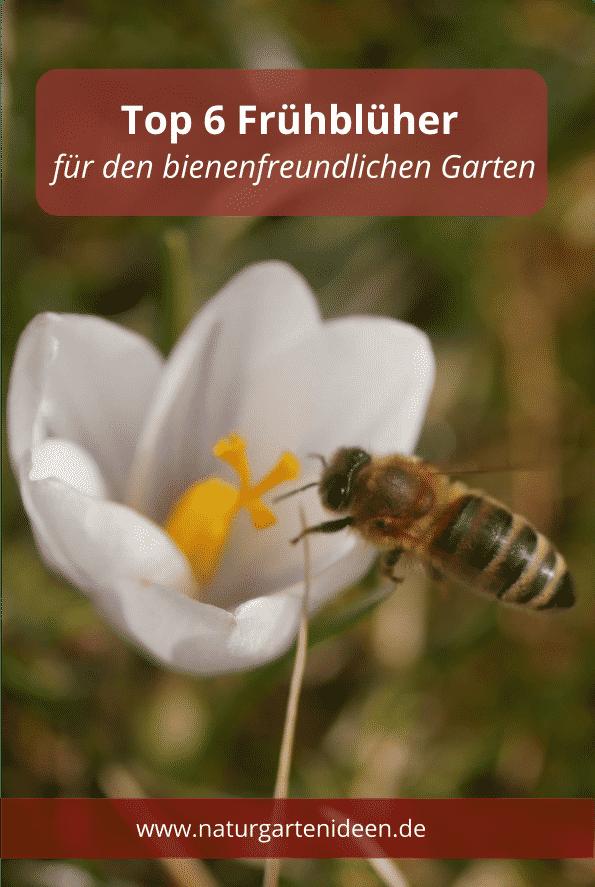 Top 6 Fruhlingsblumen Fur Den Garten Bienennahrung Im Fruhling