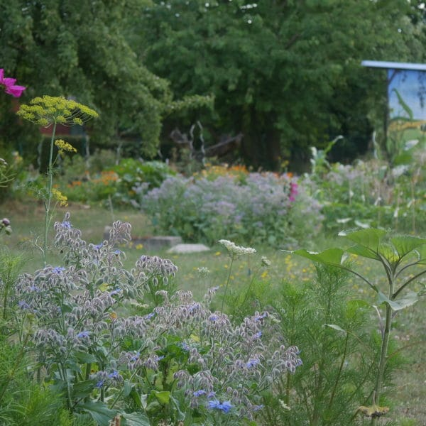 naturgarten gartenblog brandenburg
