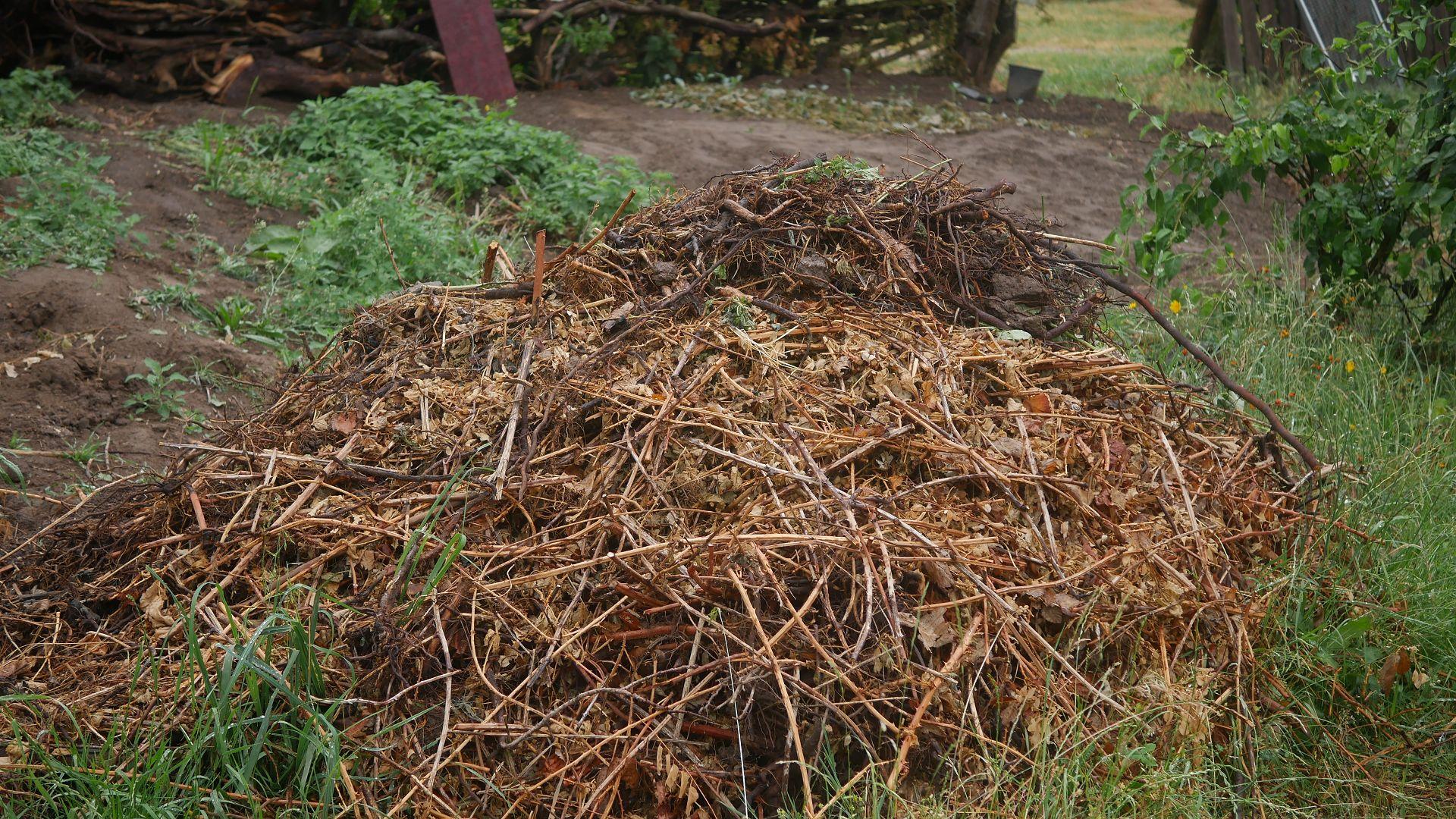 Brombeerpflanzen Brombeere entfernen invasive Brombeeren Brombeer Wurzeln Brombeeren im Garten Brombeer Fähigkeiten Brombeer Faszination Brombeer Eigenschaften Brombeeren verwildert