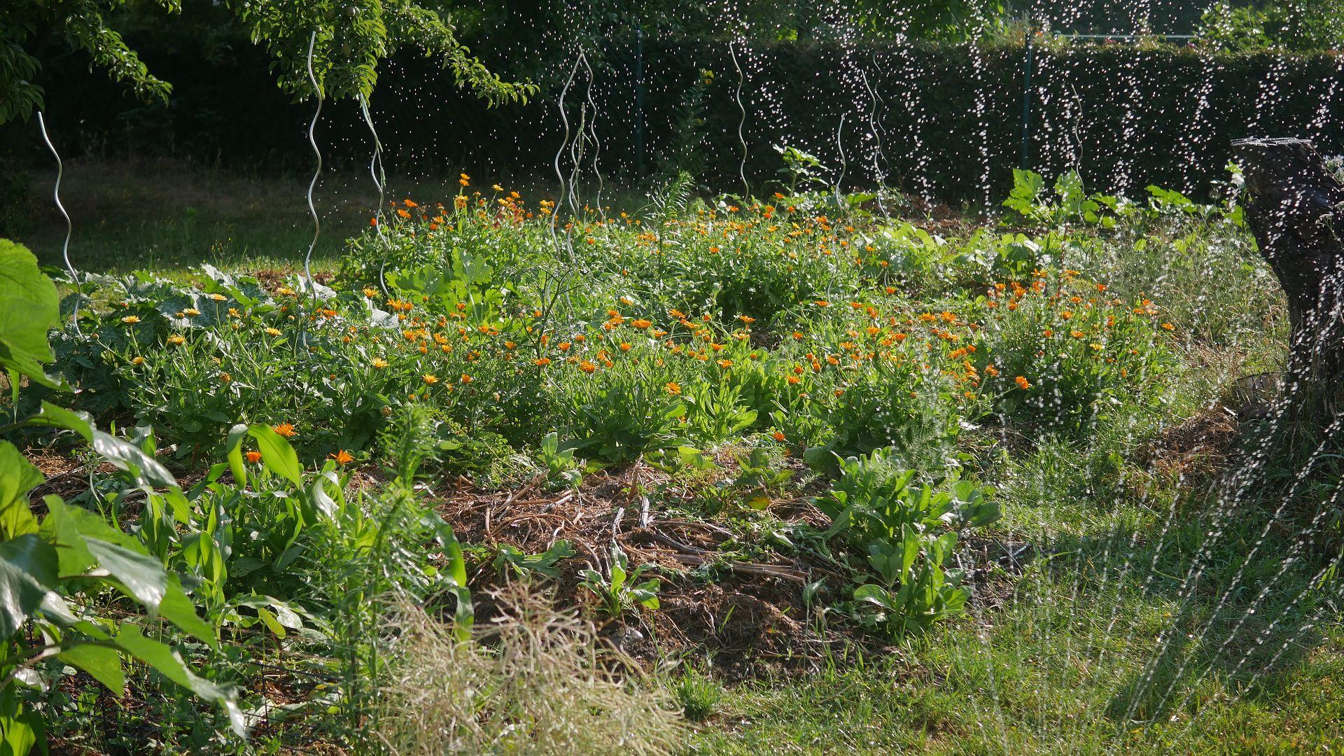 Gartenjahr 2018 Gartensaison 2018 Garteneinblick Gartenrundgang Gartenerlebnisse Gartenmomente Gemüse Korb Beet wässern