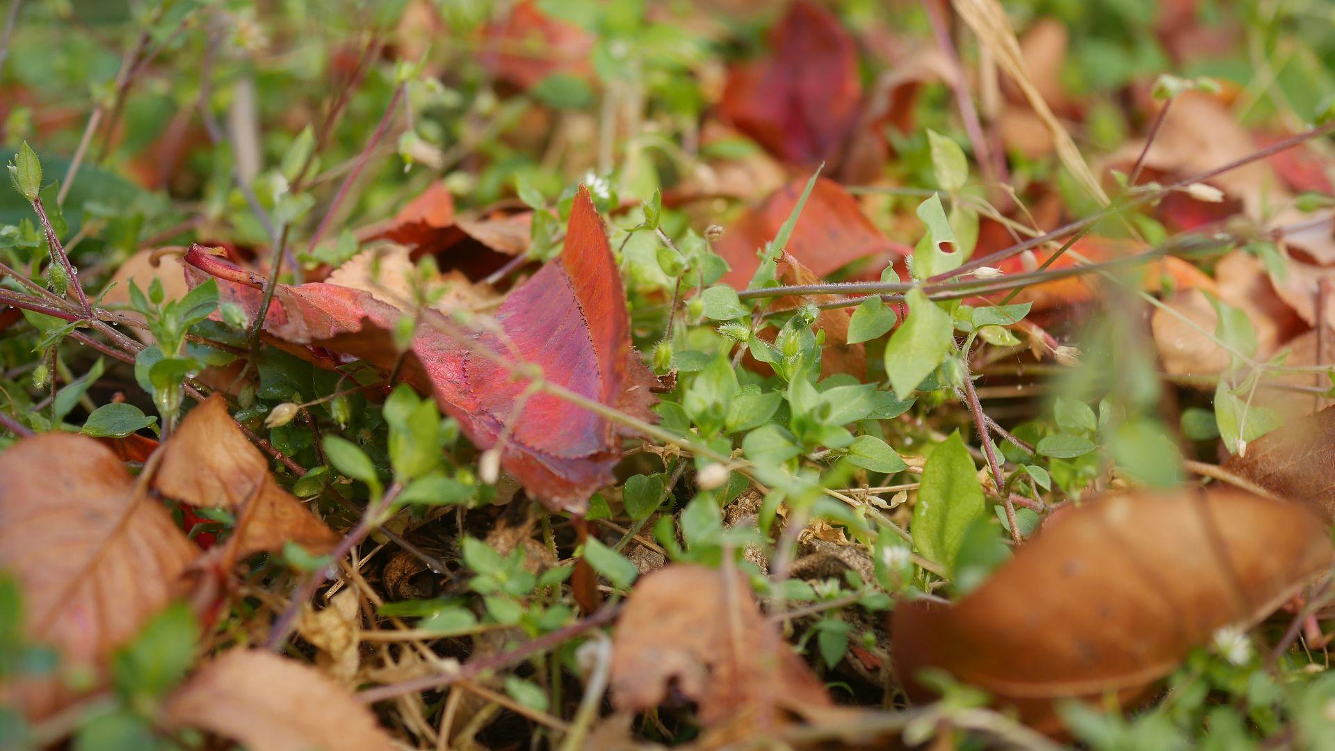 Gartenjahr 2018 Gartensaison 2018 Garteneinblick Gartenrundgang Gartenerlebnisse Gartenmomente Herbst garten
