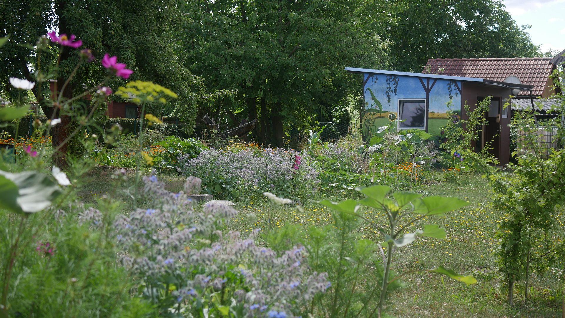 Gartenjahr 2018 Gartensaison 2018 Garteneinblick Gartenrundgang Gartenerlebnisse Gartenmomente Gemüse Naturgarten