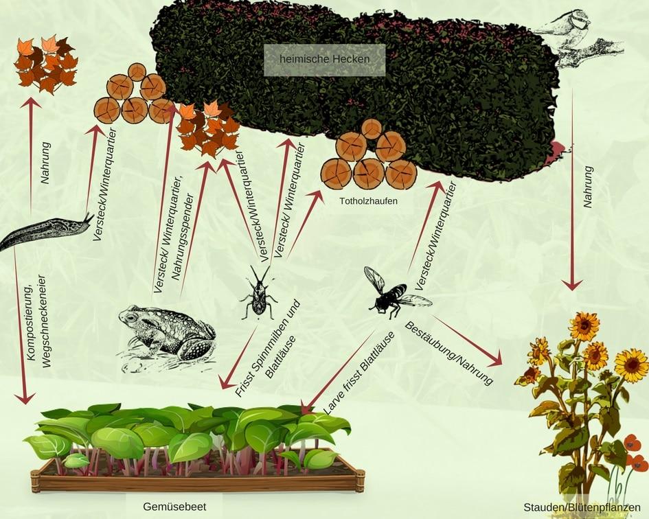 giftfreies Gärtnern mit Hilfe von Naturgartenelementen