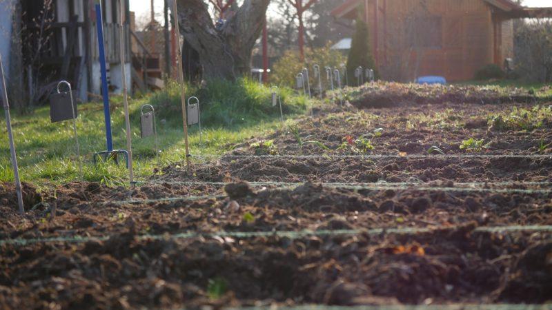 Gemüsebeet anlegen Mischkultur Beet Reihenmischkultur Beetplan Beetvorbereitung Gemüse im Garten eigenes Gemüse Pflanzschilder Gute Nachbarn