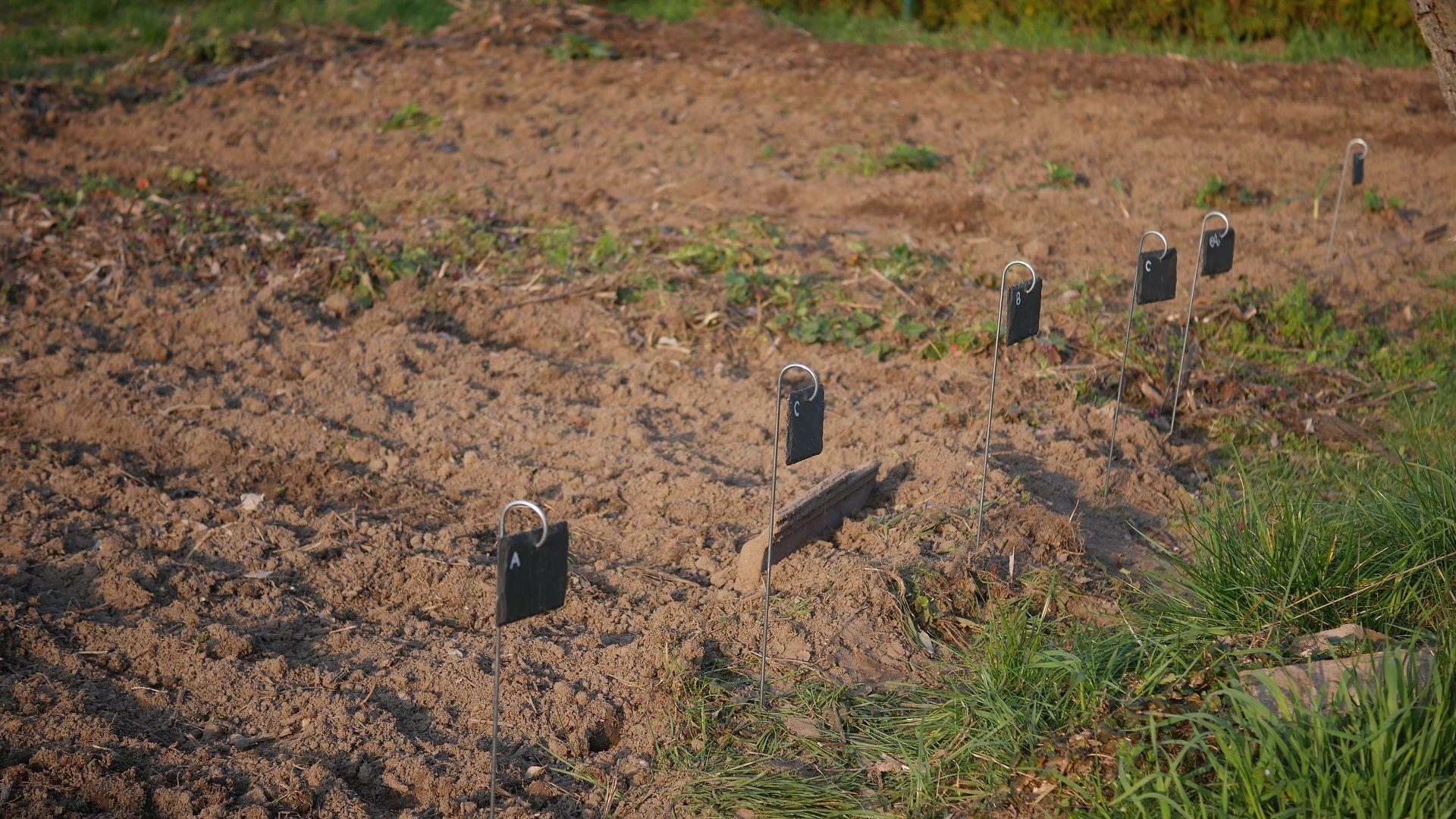 Gemüsebeet anlegen Mischkultur Beet Reihenmischkultur Beetplan Beetvorbereitung Gemüse im Garten eigenes Gemüse Pflanzschilder Schiefer Gute Nachbarn
